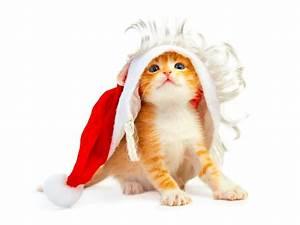 Funny Animals: Cute Christmas Animals