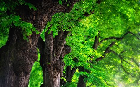 Tree Backgrounds Tree Backgrounds Image Wallpaper Cave