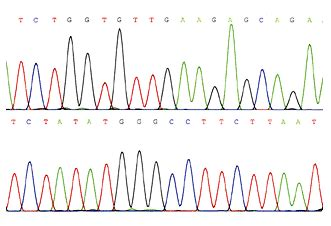 Illumina Sequencing Service Dna Sequencing Services Information Engineering360
