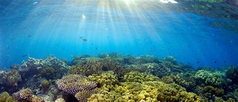 WWF - Protect our Great Barrier Reef - WWF-Australia