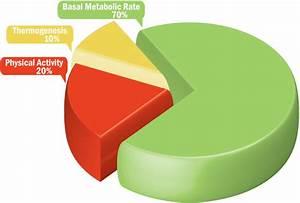 Basal Body Chart When Basal Metabolic Rate Bmr Women Health Info Blog