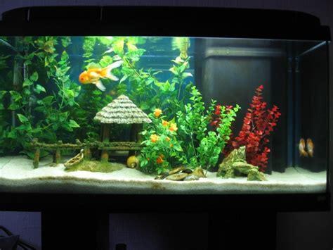 photo bac de poissons japonais page 3 aquariophilie org