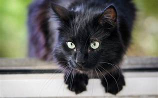black cat names 250 best black cat names for naming your new kitten