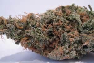 Medical Marijuana Blue Dream