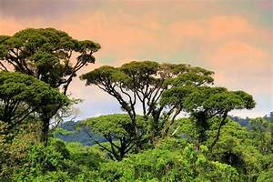 Costa Rican Rainforest Canopy | Been There! | Pinterest