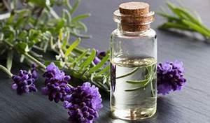 Lavendelöl Selber Machen : nachhaltigkeit informationen rund um nachhaltiges leben ~ Markanthonyermac.com Haus und Dekorationen