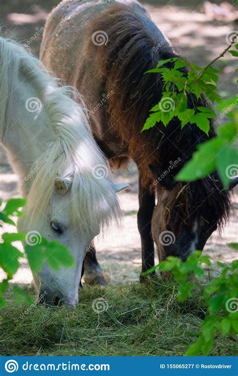 equus caballus horse animal mammal pony dier wit het cavallino cavallo animale mammifero bianco