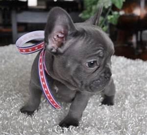 Limited Edition French Bulldog Tee | So cute, Chang'e 3 ...