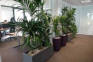 Plantes Vertes Ou Fleuries Pour Entreprises Sur Lyon Et