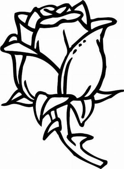 Coloring Rose Pages Rosa Flower Shapes Colored