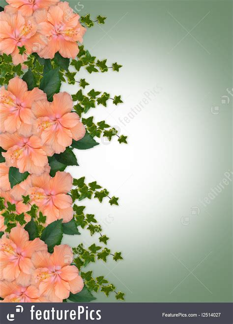illustration  hibiscus peach floral border