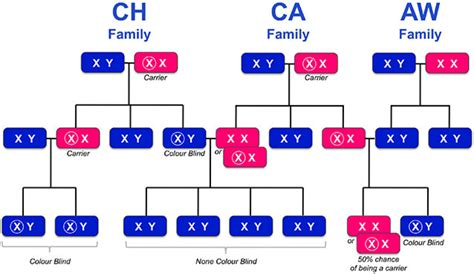 How Does A Person Inherit Color Blindness by Real Family Tree Colour Blind Awareness