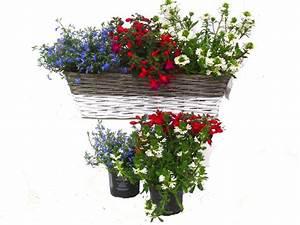 Kübelpflanzen Für Schatten : balkonpflanzen set f r balkonk sten 60 cm lang schatten bis habschatten pflanzen versand f r ~ Eleganceandgraceweddings.com Haus und Dekorationen