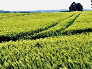 Wächst Rucola Nach : nach dem regen w chst das korn foto bild natur landschaft motive bilder auf fotocommunity ~ Watch28wear.com Haus und Dekorationen