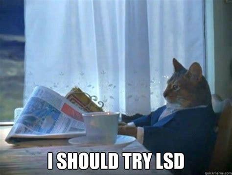 Lsd Memes - i should try lsd morning realization newspaper cat meme quickmeme