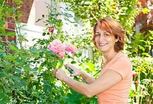 Wann Schneidet Man Rosen Zurück : verbl hte rosen schneiden wann ist das sinnvoll ~ Orissabook.com Haus und Dekorationen