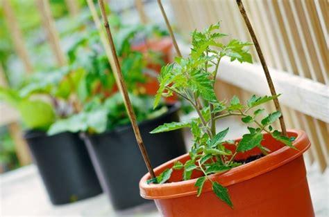 Tomaten Im Blumenkasten by Blumenk 228 Sten Bepflanzen Und Erfolgreich Den Eigenen