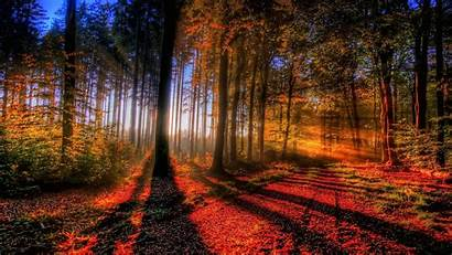 Forest Fall Wallpapers Autumn