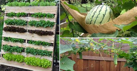 What Can You Grow In A Vertical Garden by Growing A Vertical Garden And Ideas To Get You Started