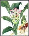 colorante alimentare in polvere dove si compra curcuma spezia orientale alimentipedia enciclopedia