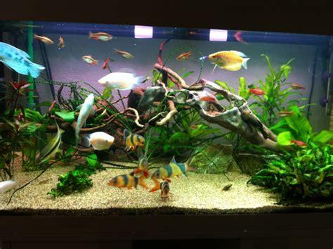algue dans l aquarium algue dans l aquarium 28 images probl 232 me d algues dans l aquarium probl 232 me d algues