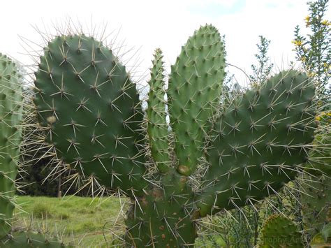 pictures of cactuses cactus photography art plus