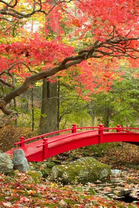 wallpaper autumn maple trees japanese garden  nature