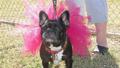 join    city  goodyear wag tag event peoria