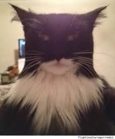 batman cat viral photo of cat looks just like batman pawnation