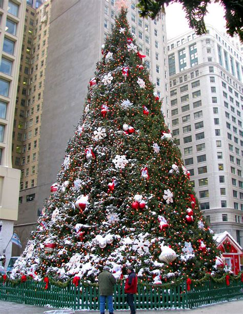 history   official chicago christmas tree cbs