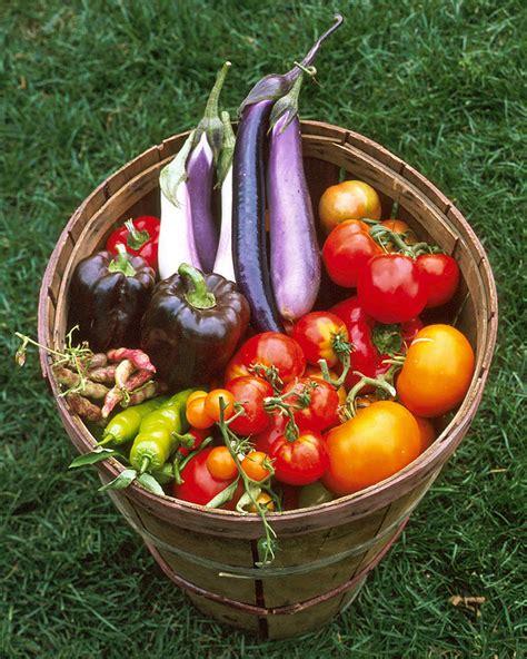 Garden Vegetarian - planning your vegetable garden martha stewart