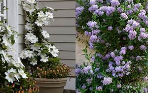 Plantes Grimpantes Pot Pour Terrasse : cour et patio archives my little jardin my little jardin ~ Premium-room.com Idées de Décoration