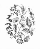 Herbs Herb Coloring Pages Spices Drawing Thyme Results sketch template