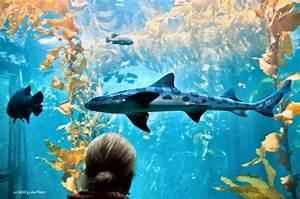 The Monterey Aquarium - The wonders of the ocean up close