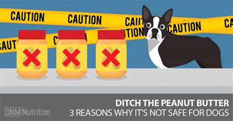 dogs eat peanut butter  reasons peanut butter isnt safe