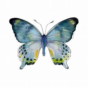 Laglaizei Butterfly Painting - 68 Laglaizei Butterfly by ...