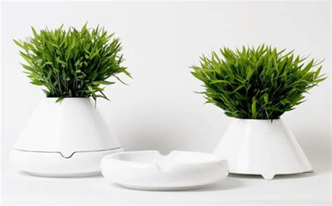 minimalist plants white green nature natural garden plants grass minimal minimalist plant foliage becreation
