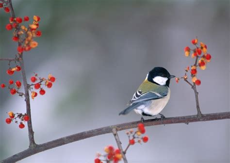 秋冬季树枝上的小鸟图片 第20张 尺寸:2950x2094 (天堂图片网)