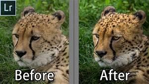 How To Edit Wildlife Portraits