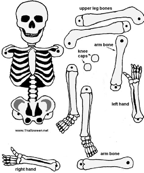 skeleton template http 1halloween net images cutskele gif paper dolls montessori activities and
