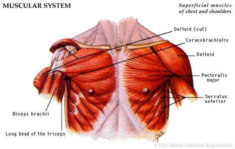 heilpraktiker  anatomie atlas  muskulatur