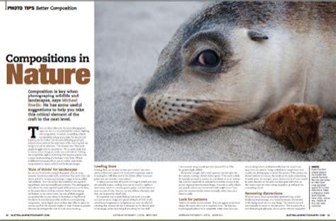 wildlife photography wildlife photography article