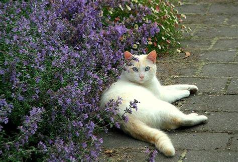 Piante Tossiche Per Gatti by Il Mondo In Un Giardino Piante Tossiche Per I Gatti