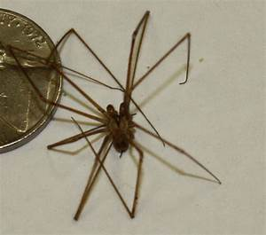brown recluse - Free Large Images