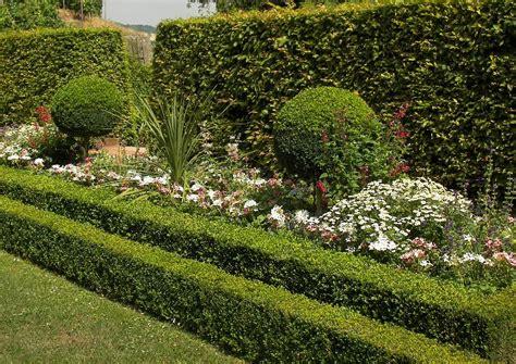 Immergrüne Buchsbaumkugeln Als Hochstamm Garten Pflanzen