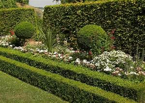 Pflanzen Pflegeleicht Garten : immergr ne buchsbaumkugeln als hochstamm garten pflanzen ~ Lizthompson.info Haus und Dekorationen