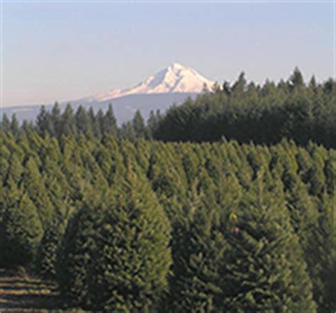 oregon christmas tree growers clackamas county tree farms the complete pilgrim religious travel