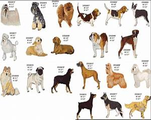 Tag For Small dog breeds with pictures and names - Litle Pups