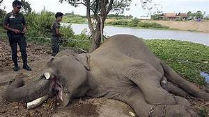 Elephant Featured In Film 'Alexander' Killed By Thai ...