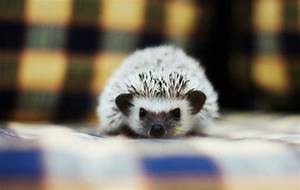 Facts, About, Exotic, Pets, You, Can, Own, Because, Calgary, Pet